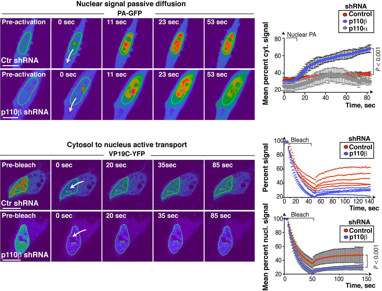 defects in nucleocytoplasmic traffic in PIK3CB def cells