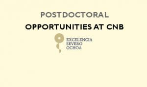 Postdoctoral opportunities at the CNB