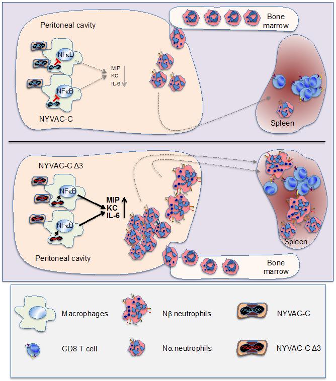 región del protocolo de cáncer de próstata emilia roma mapa